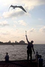 cayman islands reef resort frigate feeding 5