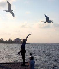 cayman islands reef resort frigate feeding 7
