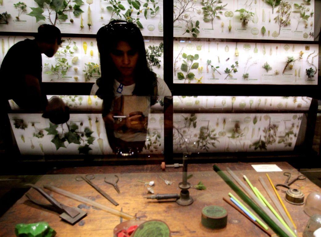 cambridge harvard art museum glass flowers exhibit renovation reopened 1