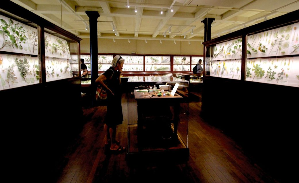 cambridge harvard art museum glass flowers exhibit renovation reopened 3