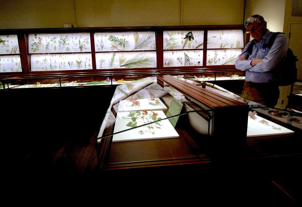 cambridge harvard art museum glass flowers exhibit renovation reopened 4