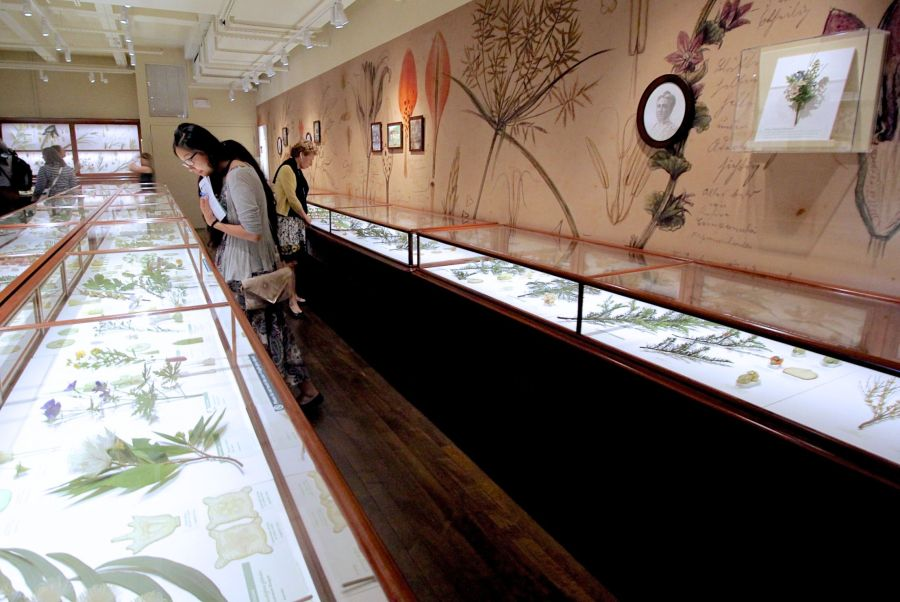 cambridge harvard art museum glass flowers exhibit renovation reopened 5
