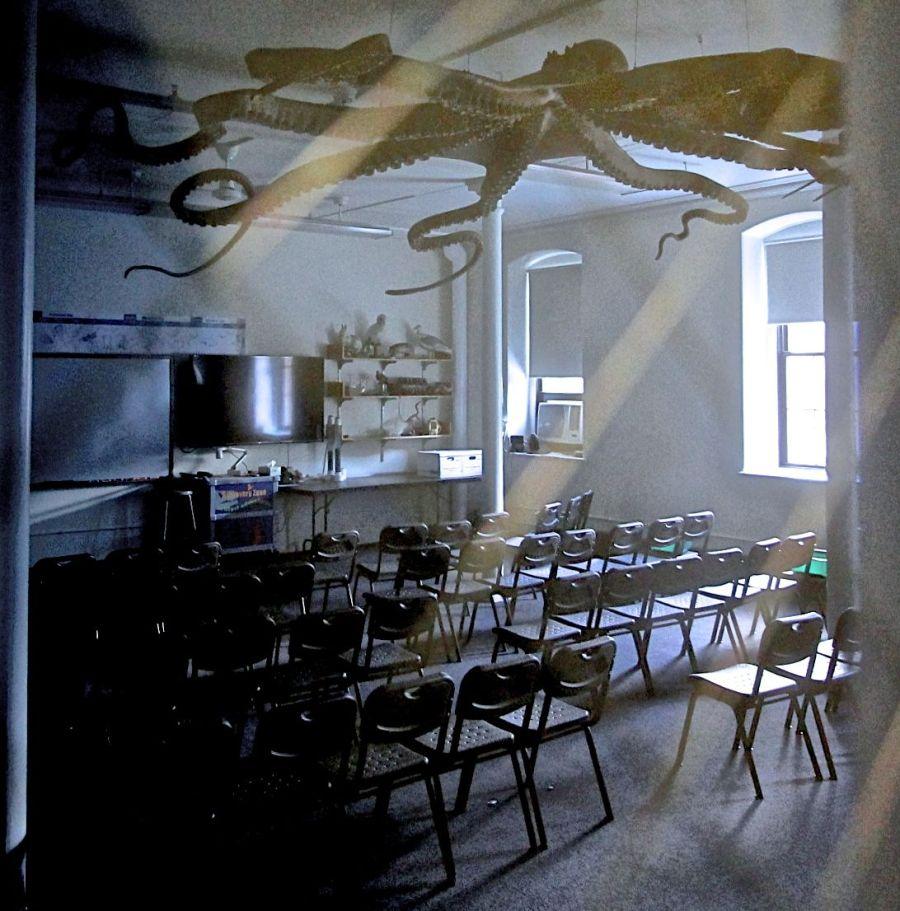 cambridge harvard natural history museum octopus classroom