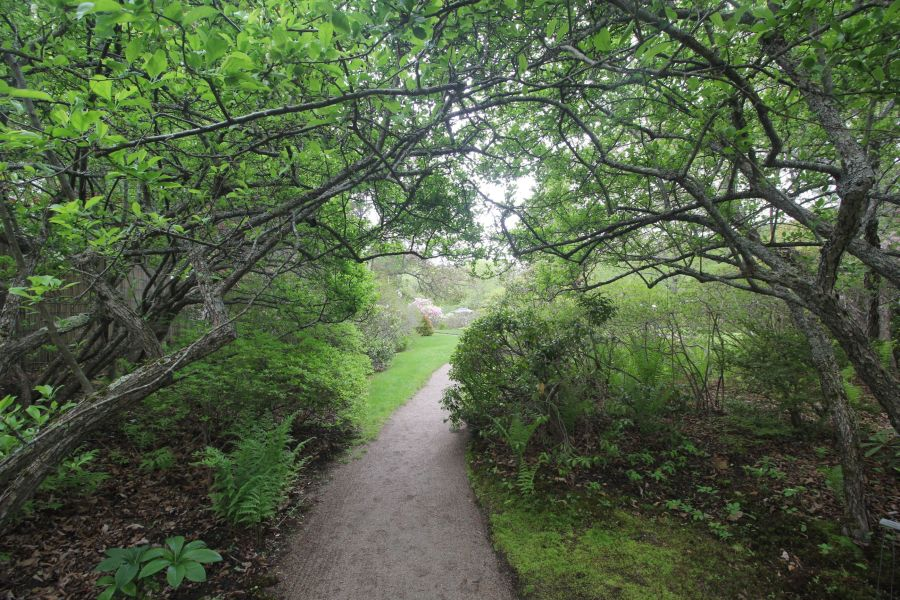 maine mount desert island azalea garden 1