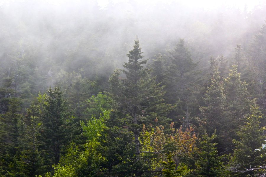 maine mount desert island cadillac mountain mist 4