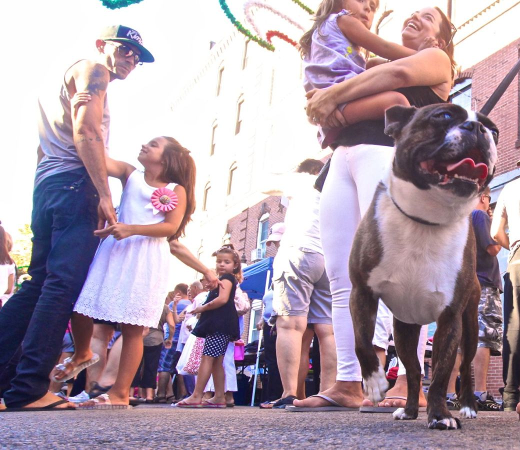boston north end st. lucy's festival august 29 2016 french bulldog