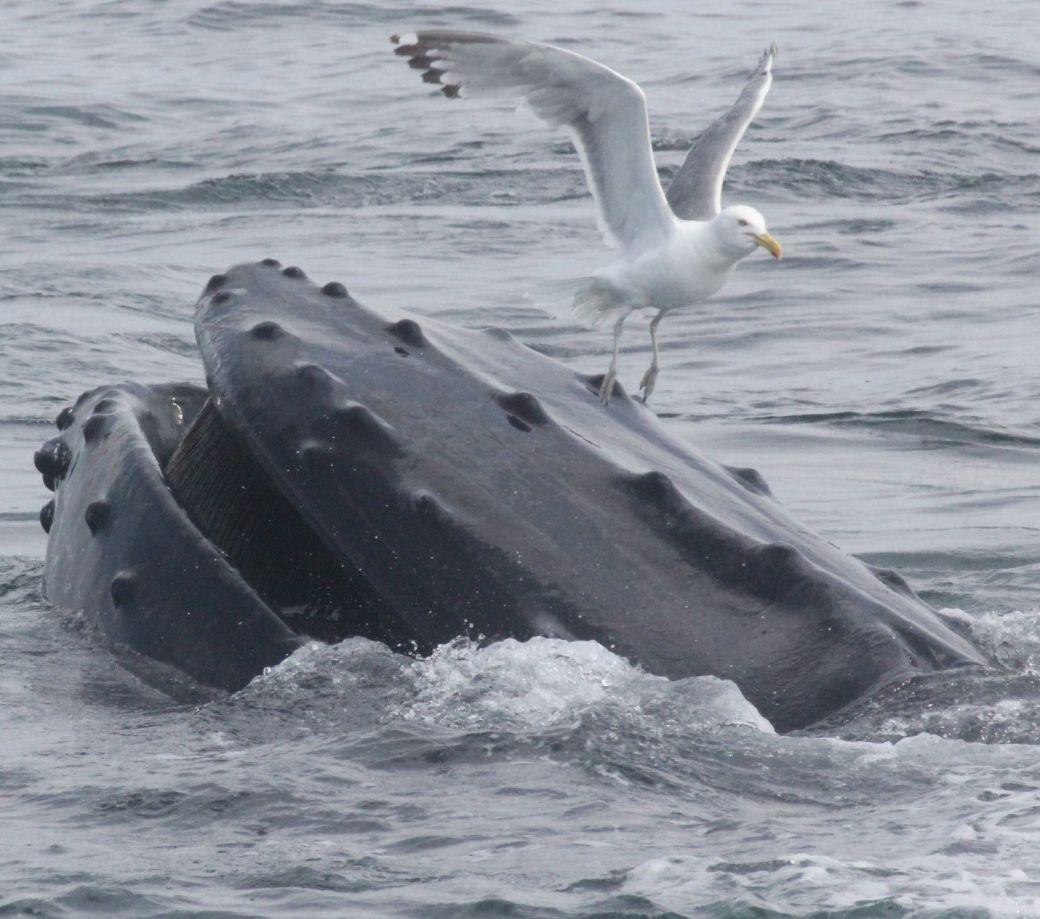 boston whale watch august 6 2016 10