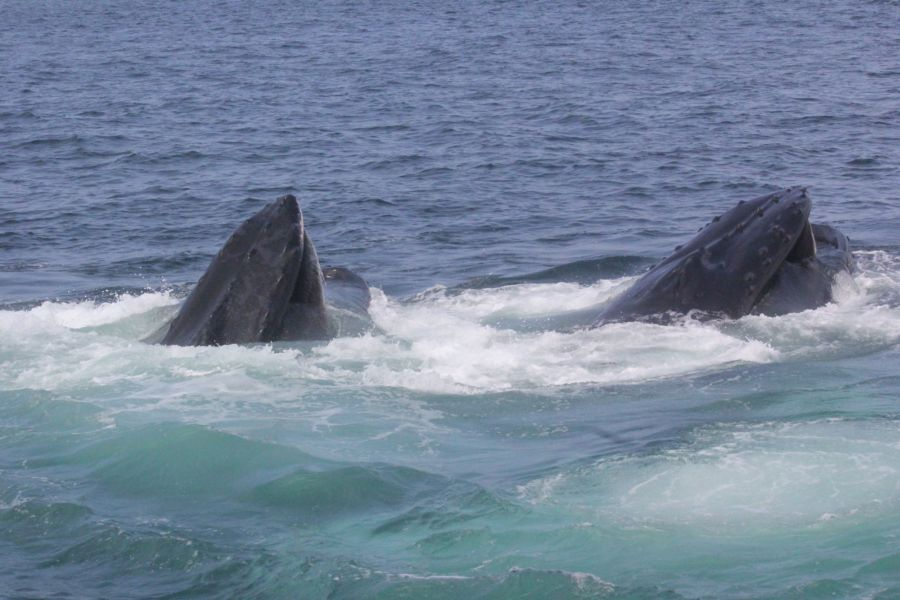 boston whale watch august 6 2016 12
