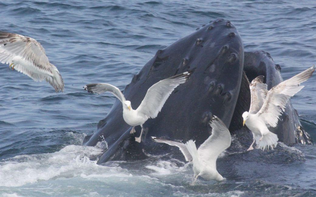 boston whale watch august 6 2016 14