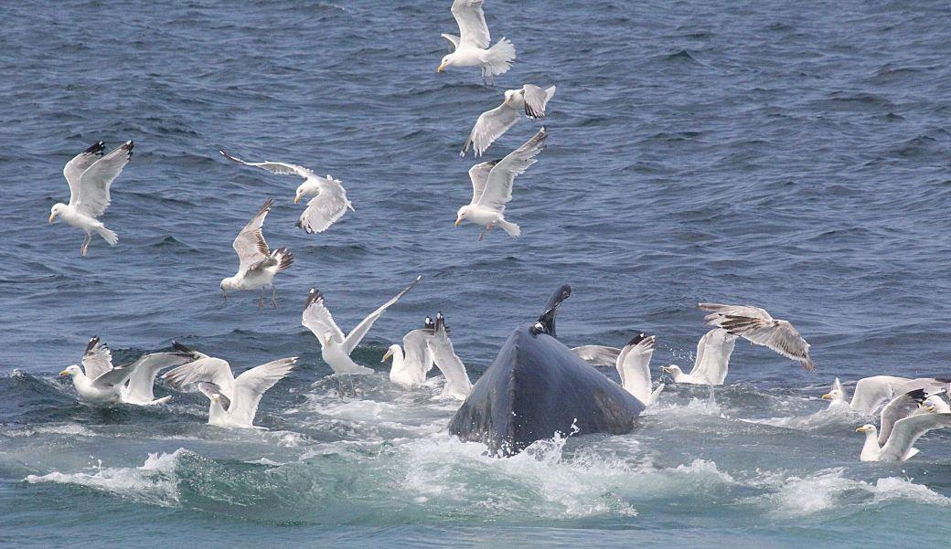 boston whale watch august 6 2016 17