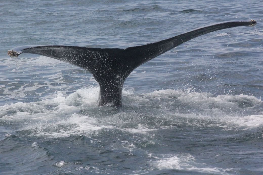 boston whale watch august 6 2016 18