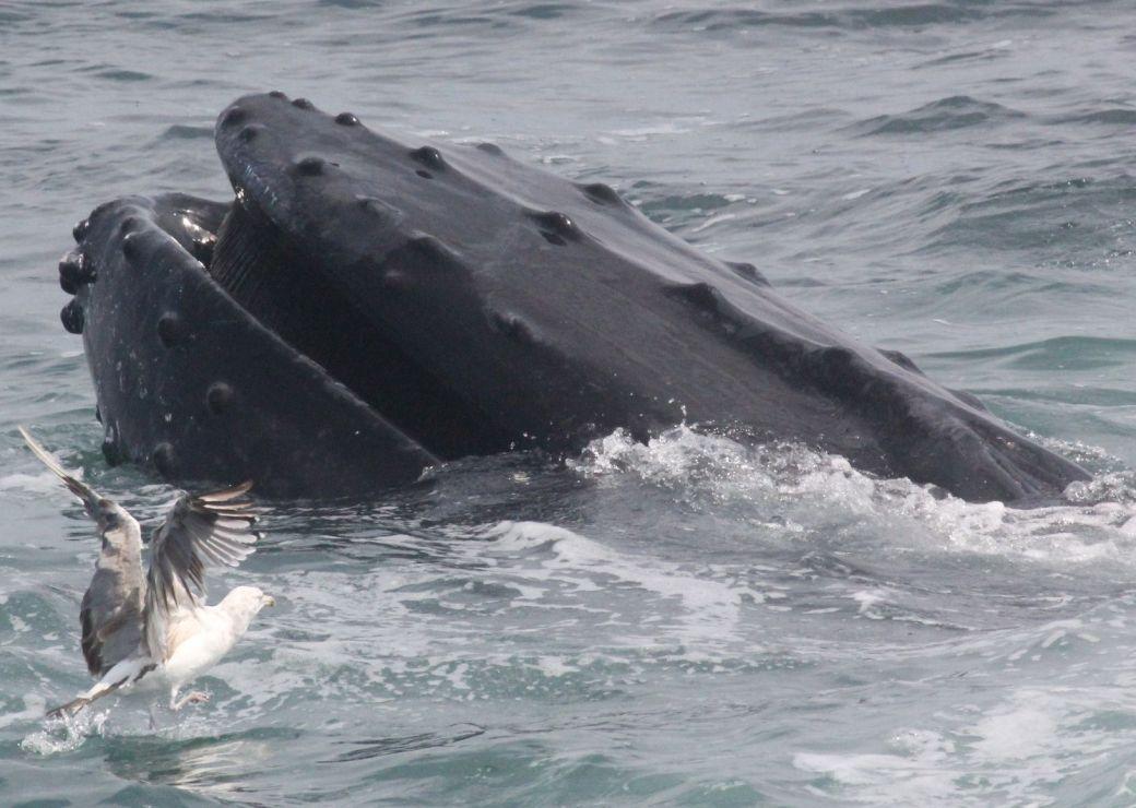 boston whale watch august 6 2016 5