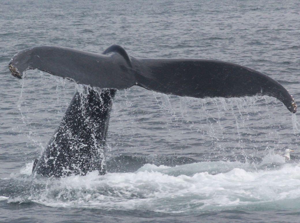 boston whale watch august 6 2016 6