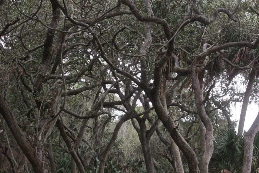 lake-maggiore-florida-nature-preserve-trees-2