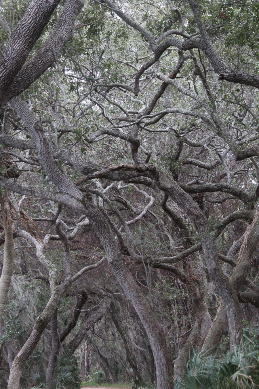 lake-maggiore-florida-nature-preserve-trees-3