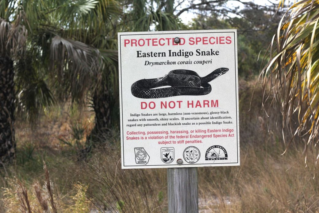 lake-maggiore-florida-nature-preserve-trees-do-not-harm-indigo-snake
