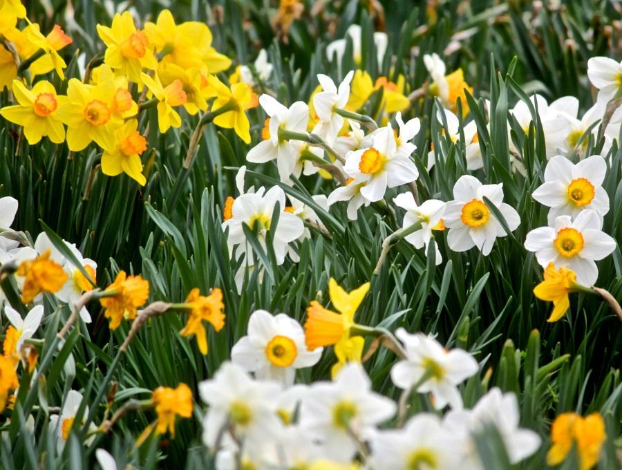 boylston tower hill botanic garden 7