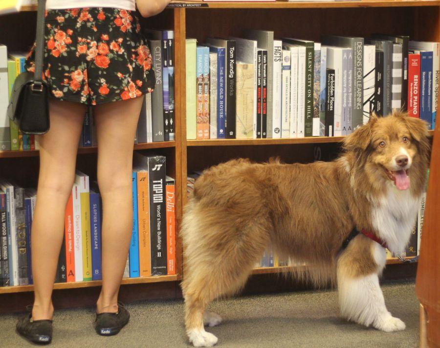 cambridge harvard book store people girl dog
