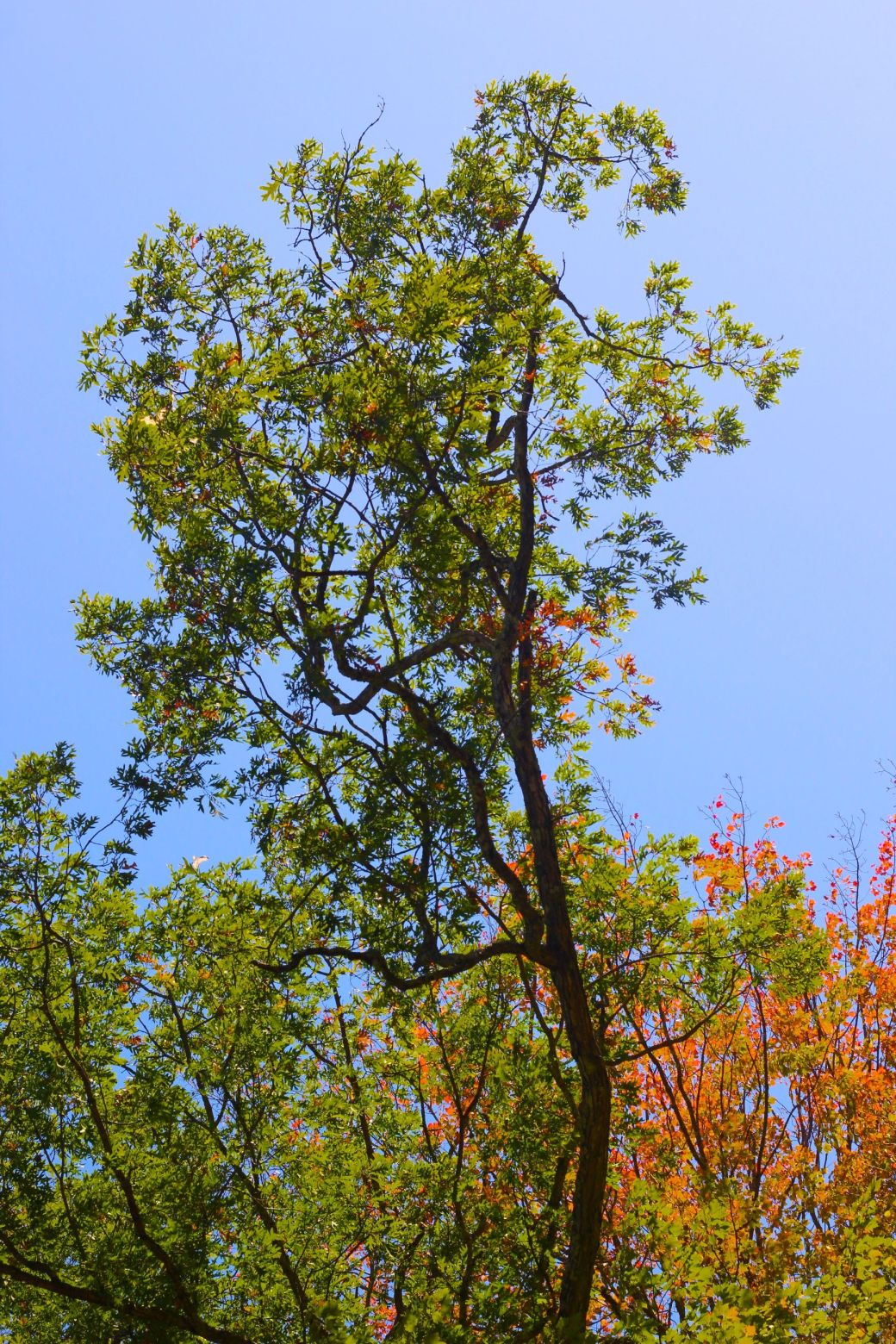 new hampshire swansea foliage