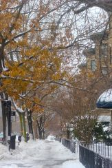 boston beacon street january 20 2019 snow 20