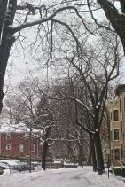 boston beacon street january 20 2019 snow 5