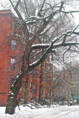 boston beacon street january 20 2019 snow 8