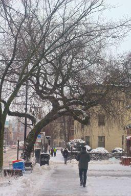 boston beacon street january 20 2019 snow 9