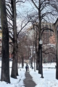 boston downtown crossing march 5 2019 snow boston common trees
