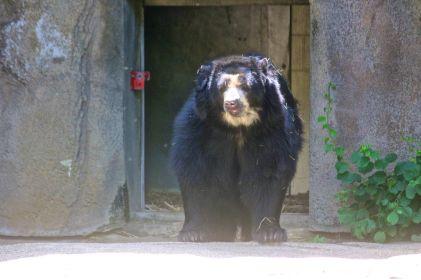 philadelphia zoo bear