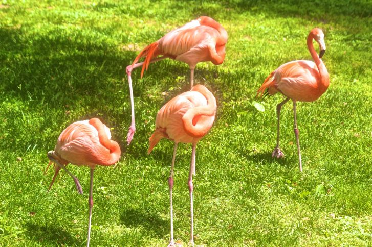 philadelphia zoo pink flamingos
