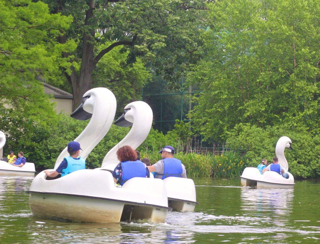 philadelphia zoo swan boats