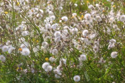 boston spectacle island flowers