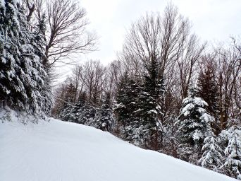 bretton woods ski resort trees snow