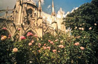 paris sacre coeur side flowers slides 2001
