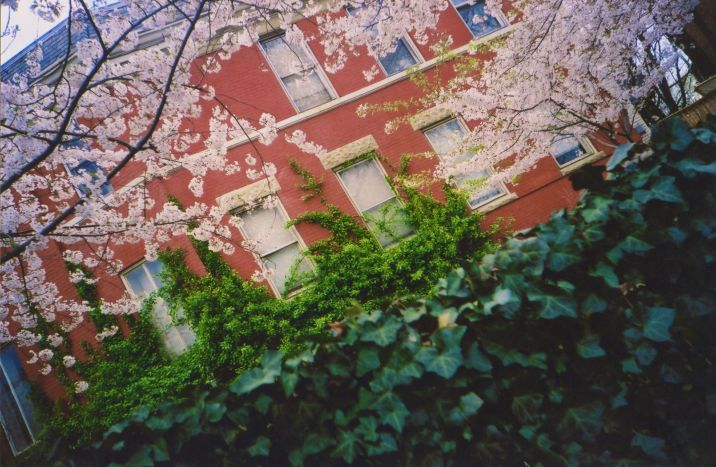washington dc capitol hill house cherry blossoms lomo photos 33
