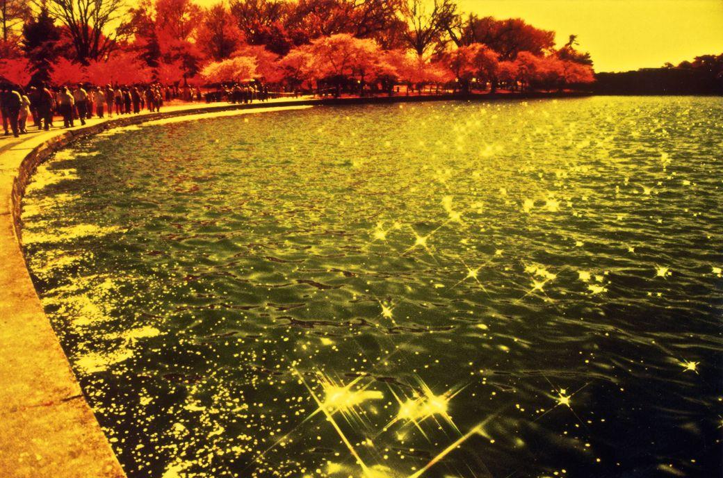 washington dc cherry blossoms color infrared film 2001 2