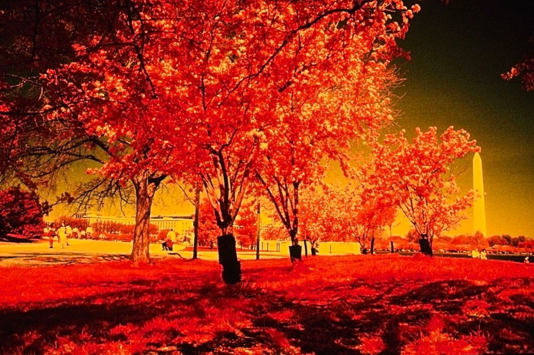 washington dc cherry blossoms color infrared film 2001 5
