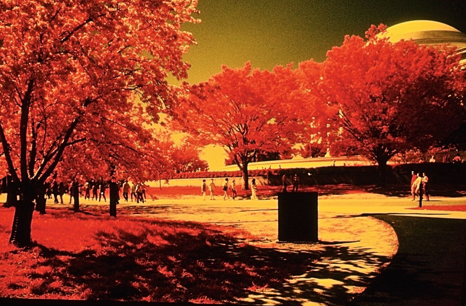 washington dc cherry blossoms color infrared film 2001 7