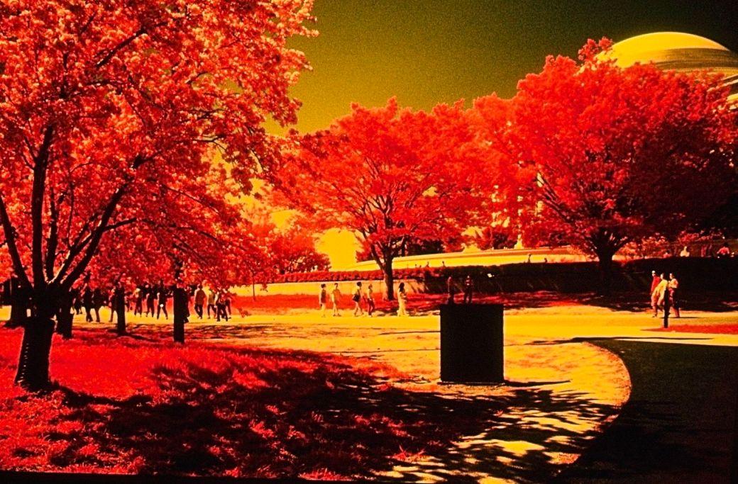 washington dc cherry blossoms color infrared film 2001 7