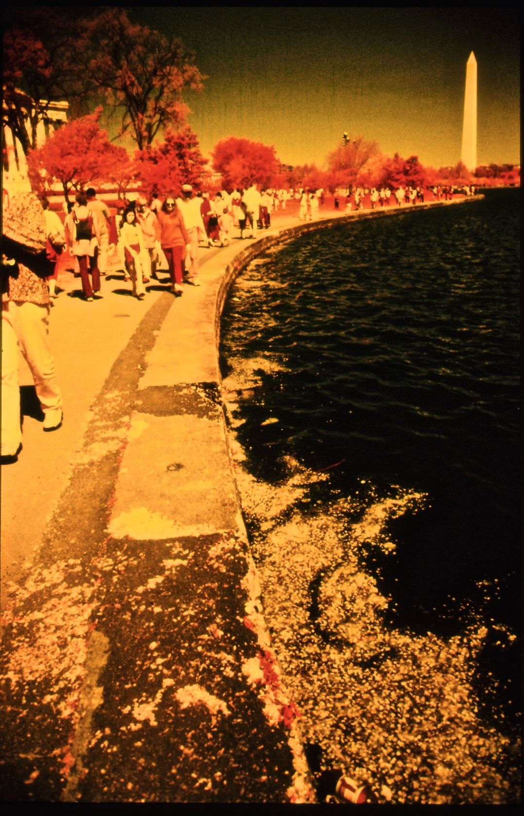 washington dc cherry blossoms color infrared film 2001 9
