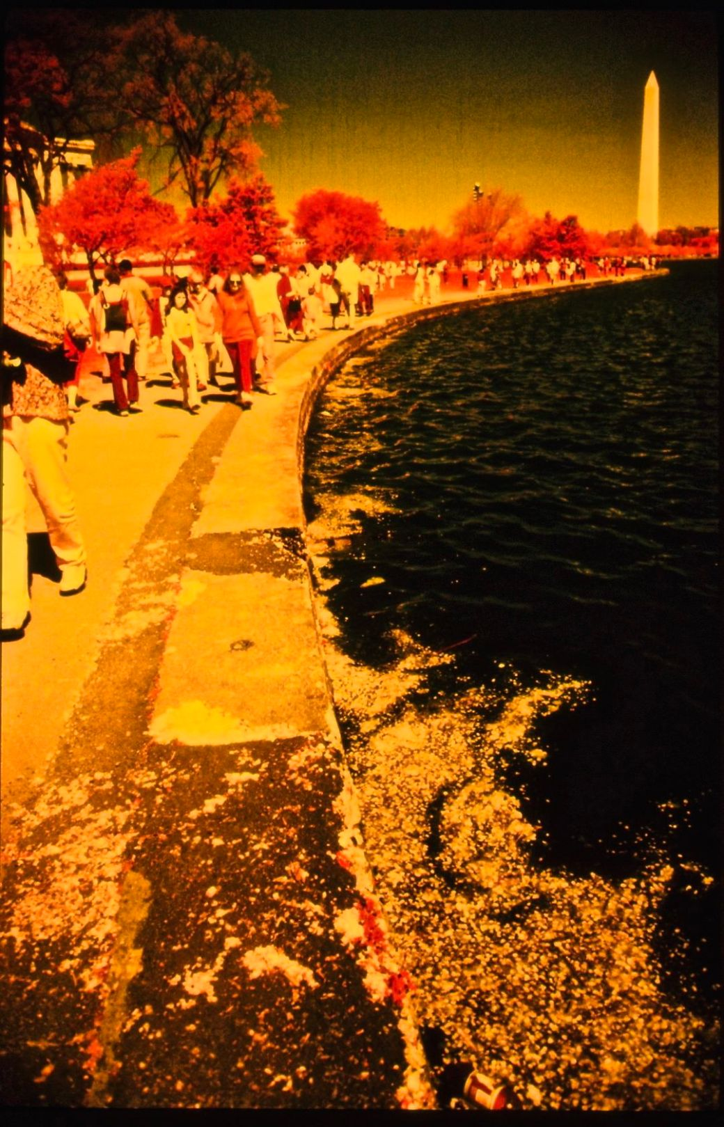 washington dc cherry blossoms color infrared film 2001 9