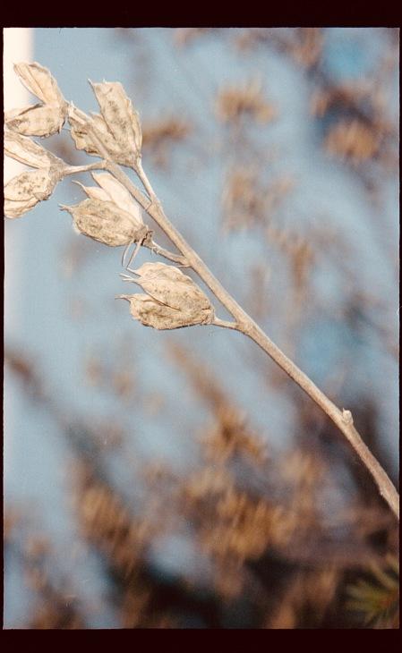 boston jamaica plain dry flower portra 400
