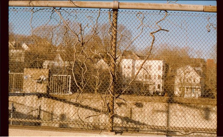 boston jamaica plain fence vines cinestill 50